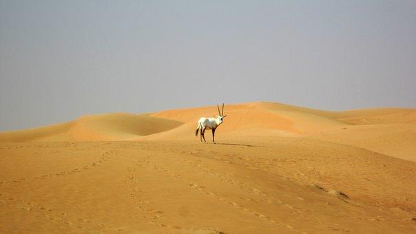 はじめて中東(ドバイ・バーレーン)へ行った感想